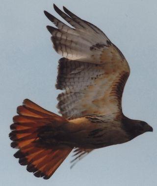 Hawk07