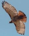 Hawk12